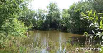 Mosbach: Ausgesetzte Fische im Hardhofsee bedrohen seltene Molche - Rhein-Neckar Zeitung