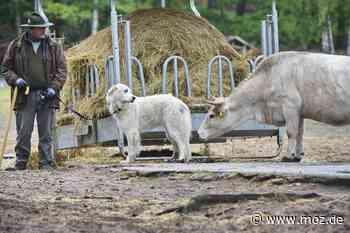 Wolfsschutz: Zwei neue Wachhunde für den Wildpark Schorfheide - Märkische Onlinezeitung