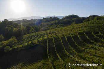 Asolo Prosecco consolida legame con territorio - Corriere del Vino - Corriere del Vino