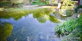 A Valbonne, la Brague n'en peut plus de ses eaux usées - Nice-Matin