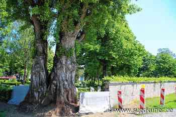 Steine bröckeln und Baum drückt: Wie die Friedhofsmauer in Gottmadingen ... | SÜDKURIER Online - SÜDKURIER Online