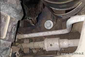 Rutigliano, gatto resta incastrato nel motore dell'auto. Lo salvano i volontari - BariViva