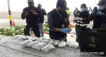 Transportista viajaba a Ilo llevando droga oculta en bolsas con verduras - Diario Correo