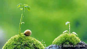 Rapporto Ambiente dell'Ispra: sostenibilità, unica via del rilancio economico - Il Bo Live - Università di Padova