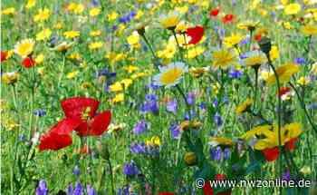 Insekten: Wo es für Bienen was zu futtern gibt - Nordwest-Zeitung