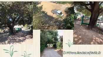 Hérault - Castelnau le lez - Sauvons Le Chêne qui protège la villa des jeunes du Refuge ! - L'indécapant