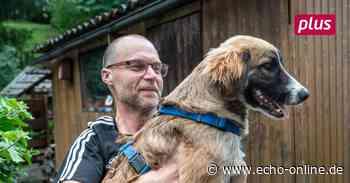 Angeschossener Rüde findet Zuhause in Heppenheim - Echo Online