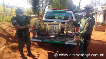 Pássaros em cativeiros geram multa de R$ 21 mil - Alfenas Hoje
