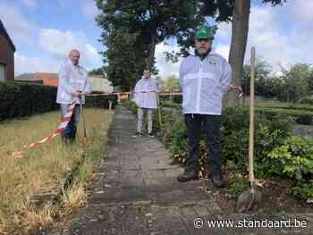Voetpaden in Sint-Jozef-Olen in slechte staat door wortels van bomen - De Standaard