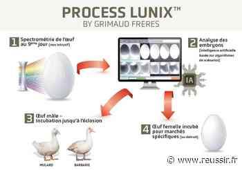 Les canards Grimaud Frères sexés dans l'œuf dès 2021 - Réussir