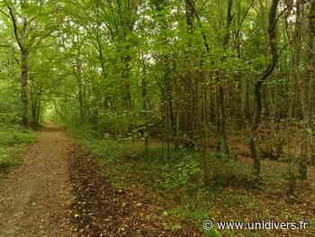Découverte de la Nature en forêt de Rougeau Saint Pierre du Perray D 446 Parrking en face De BABYLAND dimanche 26 avril 2020 - Unidivers