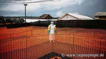 Von einer Fledermaus übertragen?: Ebola ist zurück - Tagesspiegel