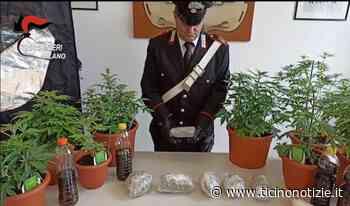 Lainate, stupefacenti: sequestrato mezzo chilo di marijuana, arrestati due uomini e una ragazza (VIDEO)   Ticino Notizie - Ticino Notizie