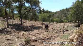 Guardia Nacional erradica dos plantíos de mariguana en Ímuris - Proyecto Puente