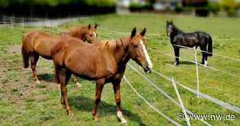 Veterinäramt Holzminden sucht neues Zuhause für gequälte Pferde - Neue Westfälische