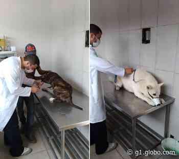 Clínica veterinária popular volta a funcionar em Iguaba Grande, no RJ - G1