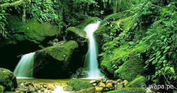 Reserva de Biósfera Oxapampa celebra 10 años de reconocimiento mundial - Wapa.pe
