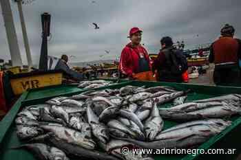 Río Negro exporta merluza del Golfo San Matías a Londres - ADN Río Negro