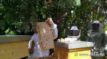 Bienenzuchtverein Sulzbach-Rosenberg zieht Bilanz zur Frühtrachternte: Honig von mehr als 1000 Bienenvölkern - Onetz.de