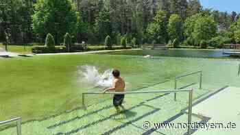 Um 13 Uhr sprangen die ersten ins Naturbad in Postbauer-Heng - Nordbayern.de