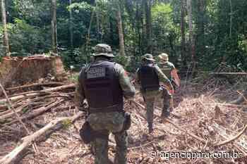 Força de Combate ao Desmatamento Ilegal fecha garimpo em Itaituba - Para