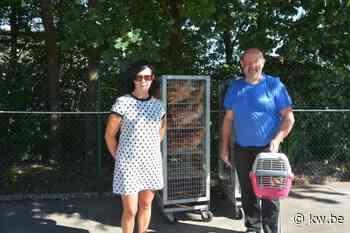 Kippenactie is een groot succes in Oostrozebeke - Milieu & natuur - Krant van Westvlaanderen