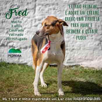 """Abrigo de Animais de Pedreira promove """"Campanha Permanente de Adoção de Cães"""" - O Regional"""
