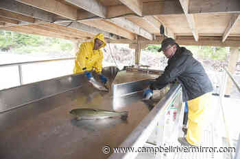 First Nations-owned land-based fish farm in near Alert Bay getting Ocean Wise certification - Campbell River Mirror