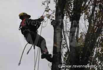 Alfonsine: domani lavori Enel eccezionali per taglio piante in prossimità delle linee elettriche - Ravenna Web Tv - Ravennawebtv.it