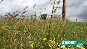 Medebach: Blühstreifen an Wegrändern schaffen Lebensräume - IKZ