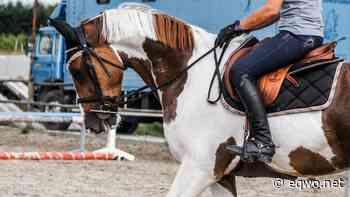 Konzentration im Sattel leicht gemacht | Equestrian Worldwide | Pferdesport weltweit - EQWO - Equestrian Worldwide