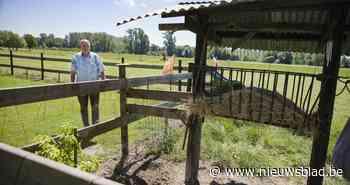 Vergeet duur systeem. Kippen beschermd tegen vossen en marters dankzij... vlagjes - Het Nieuwsblad