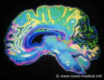 Neuroscientist discovers neuronal pulses in the human brain that activate after an injury