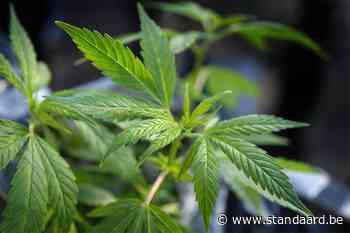 Cannabishandel opgerold in Veurne - De Standaard