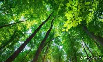 A Settimo Torinese un bosco per ricordare le vittime del Coronavirus - Mole24
