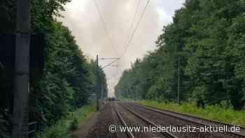 Beräumung der Brandfläche in der Bürgerheide Finsterwalde beginnt - NIEDERLAUSITZ aktuell