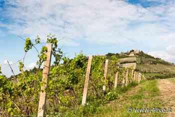 Al via le adozioni in vigna sulle colline di Cesena e Bertinoro « 4live.it - 4live.it