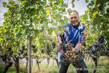 Ein anspruchsvolles Weinjahr – Das sind die Baselbieter Weine des Jahres - Basler Zeitung