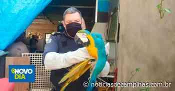 Guarda Municipal de Valinhos resgata araras-canindé que sofriam maus-tratos - Notícias de Campinas