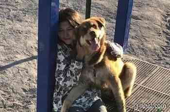 Inuvik canine reunited with his favourite human after stint in the doghouse - NNSL Media