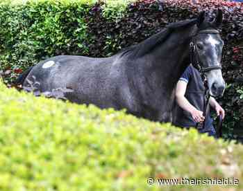 Goffs publishes Land Rover catalogue - The Irish Field