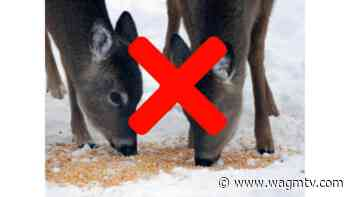 Edmundston City Council amends a by-law to prohibit white-tailed deer feeding - WAGM