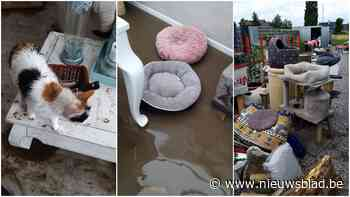 "Kattenasiel start crowdfunding nadat hele opvang overstroom: ""Alles is kapot"""