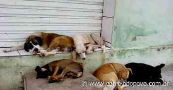 Campanha arrecada donativos para cães e gatos em Uruguaiana - Jornal Correio do Povo