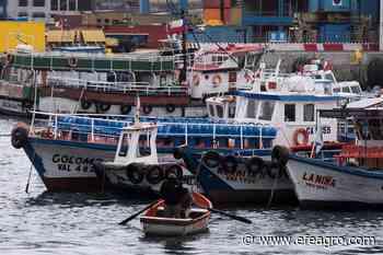 Valparaiso se ahoga entre la pobreza y la covid-19 ~ EFEAgro Información agroalimentaria - EFEagro