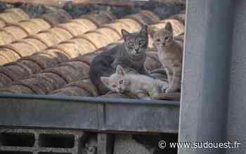 Oloron-Sainte-Marie : vers une nouvelle invasion de chats de rue? - Sud Ouest