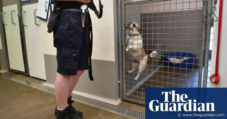 RSPCA to make nearly a fifth of staff redundant amid pandemic