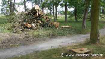 Libercourt : abattus, les arbres dangereux seront remplacés à l'automne - La Voix du Nord