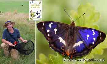The Purple Emperor spends his life boozing, fighting and fornicating for hours