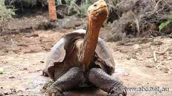 Are you full of wisdom like a Galapagos giant tortoise? Find out with our News Quiz
